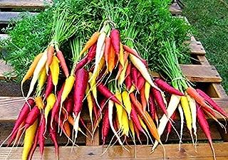 Mini Vegetable Collection, 6 Dwarf Veggies, Container Garden, Patio Garden, Summer Sale, nifty Gift, Tiny Tomato, Eggplant, Baby Carrots