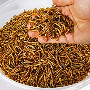 5KG Wild Bird Dried MEALWORMS