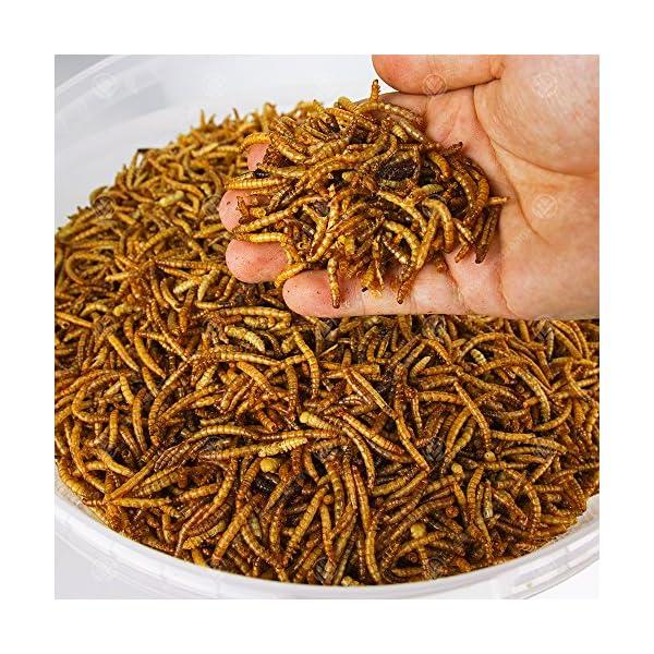5KG Wild Bird Dried MEALWORMS