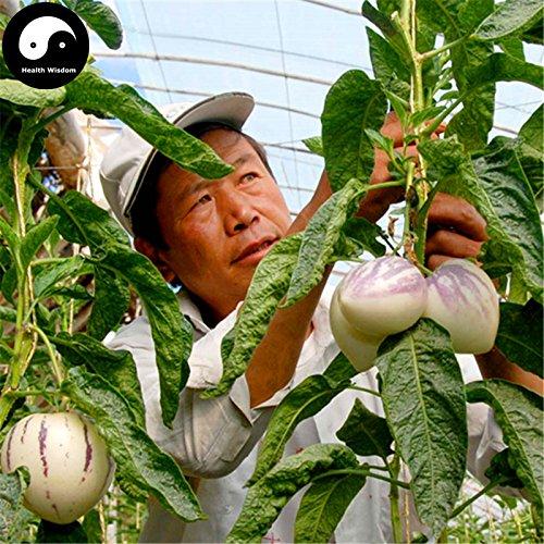 Comprar semillas de melón berenjena de frutas 120pcs planta de ginseng fruta Solanum Muricatum Aiton