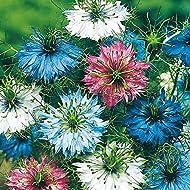 Nigella Persian Jewels mixed Annual