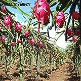 Oldhorse 100 pz//borsa gigante semi di fragola casa giardino semi di piante Sementi