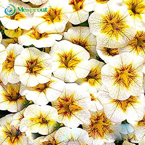 Nouvelle arrivee! 200PCS Seeds Rare Calibrachoa Jaune Pétunia Fleur annuelle Grand Blooming Flower Garden Home Bonsai