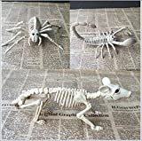 Scorpion Spider Mouse Skeleton Animal Model Horror Skeleton Animal Bones Model Halloween Animal Sakeleton Decoración Atrezzo Personalidad Creativa Juguete Regalos para niños Modelo