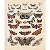 Meishe Art Poster Plakatdruck Schmetterlinge Jahrgang