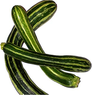 David's Garden Seeds Zucchini Cocozelle Italian WT5316 (Green) 50 Non-GMO, Heirloom, Organic Seeds