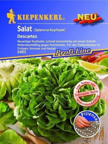 Salanova-Kopfsalat