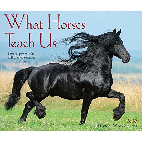 What Horses Teach Us 2016 Desk Calendar by Willow Creek Press