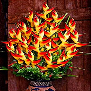 Portal Cool 100Pcs Bonsai Hibiscus Japanese Maple Miniature Garden Flower Plant Seeds Tree