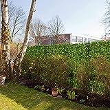 SLZFLSSHPK Seto Artificial con celosia Césped Artificial DecoraciónPantalla de privacidad de jardín al Aire Libre Pantalla de privacidad Valla de jardín Seto de Hiedra Artificial Luz Resistente t
