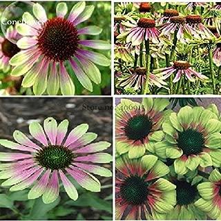 TopOne Sales Heirloom Green Envy Echinacea Coneflower Perennial Flowers, 100 seeds, medium-sized flower light fragrant