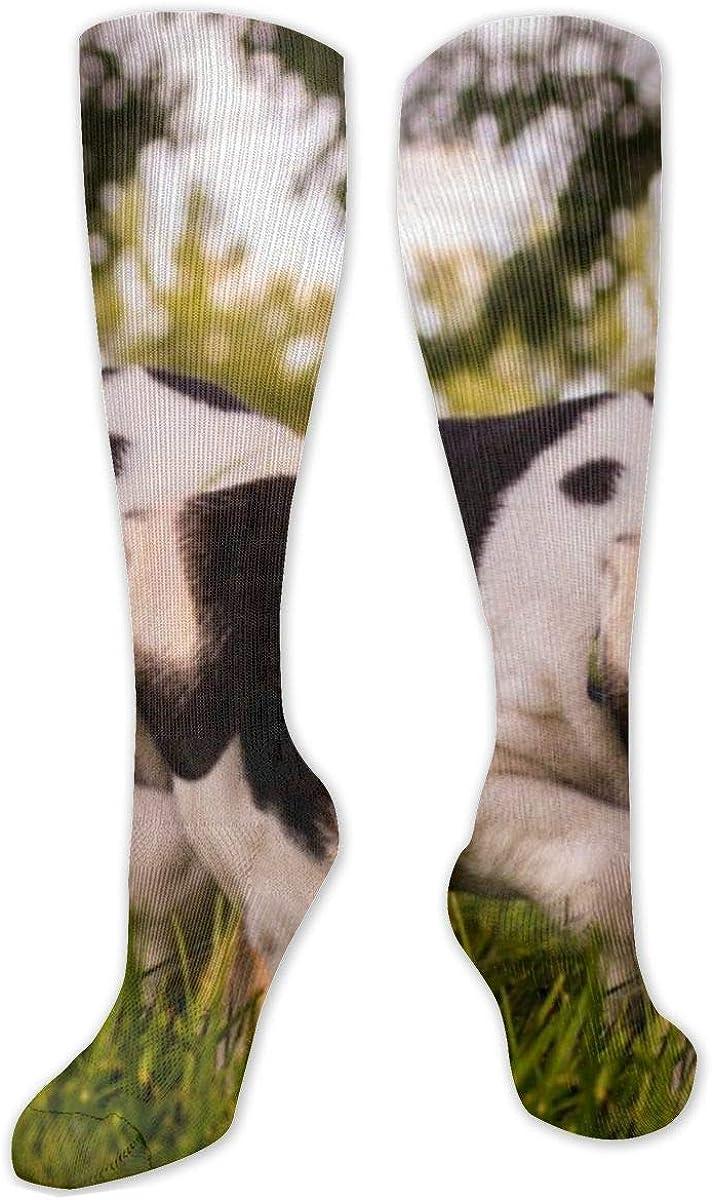 Dog On Grass Knee High Socks Leg Warmer Dresses Long Boot Stockings For Womens Cosplay Daily Wear