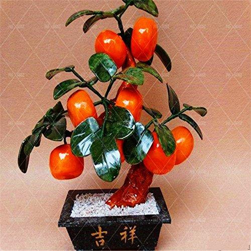 20pcs / sac de graines d'arbre orange nain Bonsai Mandarine Graines arbre comestible de fruits pour plantes potagères grand pot 1
