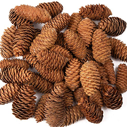Baker Ross AF922 Long Pine Cones Value Pack — Ideal for Kids' Arts and Crafts, Christmas, Sensory Stimulation, and More (Pack of 20)