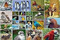 1000ピースのパズル、鳥のパターン、大人の減圧ゲーム、大人のパズル