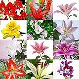 ChYoung 100 pièces Mixte lys bulbes Graine Cour Jardinage Fleur Plante graines graines de Fleurs d'été
