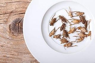 """UGFeeders 1/2"""" Crickets"""
