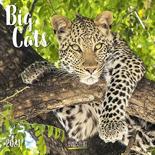 Big Cats 2021: Broschürenkalender mit Ferienterminen. Bilder von Raubkatzen. 30 x 30 cm