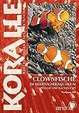 Clownfische: Im Meerwasseraquarium, Pflege und Nachzucht (Art für...