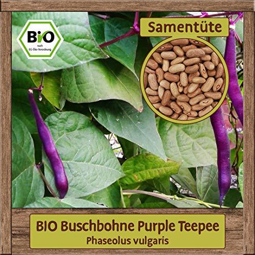 Samenliebe Hochwertige BIO Gemüse-Samen samenfeste Sorten Saatgut BIO DE-ÖKO-007 Geschenk Mix Set, Sorte:BIO Buschbohne Purple Teepee