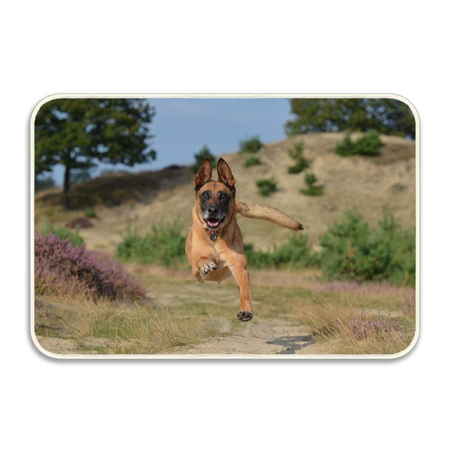 寝てるリングアメリカ玄関マット 泥落としマット 走っている羊飼いの犬 40×60cm 50×80cm 屋外 屋内 廊下 キッチン カーペット ドアマット 滑り止め付き 折りたたみ可能