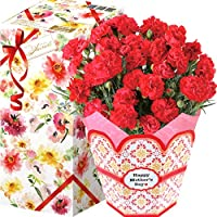 花のギフト社 母の日 カーネーション 鉢花 花鉢 鉢植え プレゼント 花 鉢 フラワーギフト 5号鉢