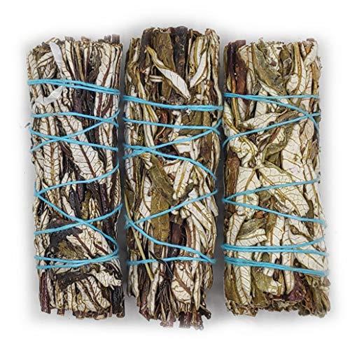 Farbenwald Yerba Santa, 3 Bündel~11cm, aus Kalifornien, Räucherware, Santakraut, Smudge Sticks