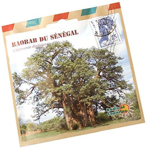 Radis et Capucine Sachet de Graine de Baobab de Sénégal Multicolore 5 x 5 x 5 cm