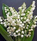 20 PC Lirio de los valles semillas de flores, semillas de orquídeas campana, rico aroma, semillas de flores bonsai, tan lindo y hermoso