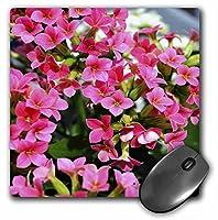 3drose LLC 8x 8x 0.25インチマウスパッド、小さなピンクの花( MP _ 53679_ 1)