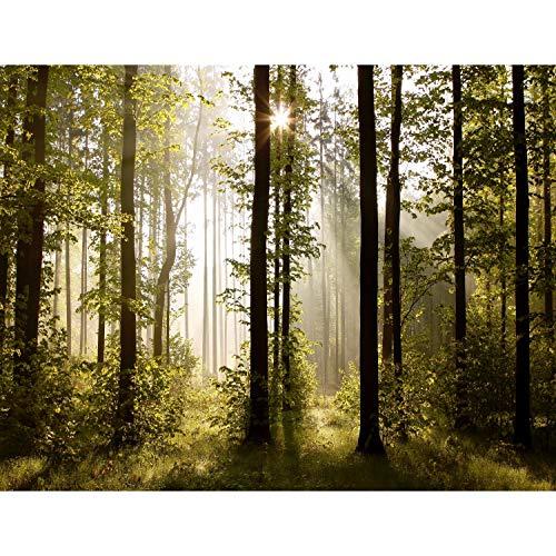 Fototapete Wald Landschaft Sonne 352 x 250 cm Vlies Tapeten Wandtapete XXL Moderne Wanddeko Wohnzimmer Schlafzimmer Büro Flur Grün Braun 9010011a