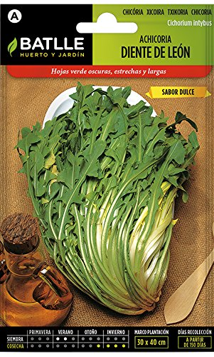 Batlle Gemüsesamen - Wild Chicoree -Radicchio Löwenzahn (4500 Samen)