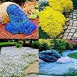 Zoom IMG-2 inkeme giardino tappeto profumato semi