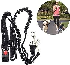 Amazon.es: correa running perro