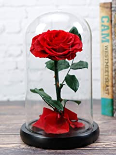 Dear her Beauty and The Beast rose Handmade Preserved Roses Forever Flowers in Glass Dome Gift Box Best Gift for Her, Anniversary Valentine Birthday Wedding, for Girls Wife Mother Lover