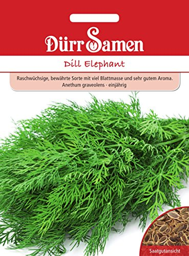 Dill Elephant Elefant,bewährte Sorte ca. 1750 Korn