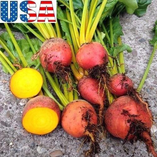 PLAT FIRM GERMINATIONSAMEN: 1000 Samen: USA-VERKäUFER Detroit Goldenes Beet 60-1000 HEIRLOOM NON GMO