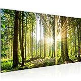 Bilder Wald Landschaft Wandbild 100 x 40 cm Vlies -