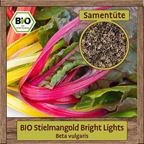 BIO Mangold Samen Bright Lights (Beta vulgaris) Blattmangold Gemüsesamen Krautstiel