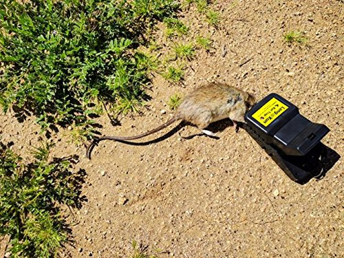 LANGXUN Rattenfalle Mausefalle Leistungsstarke, benutzerfreundliche, effiziente und schnelle Tötung Mit Latexhandschuhen, die für Küche, Garten und Lager geeignet sind (6 Pack) - 7