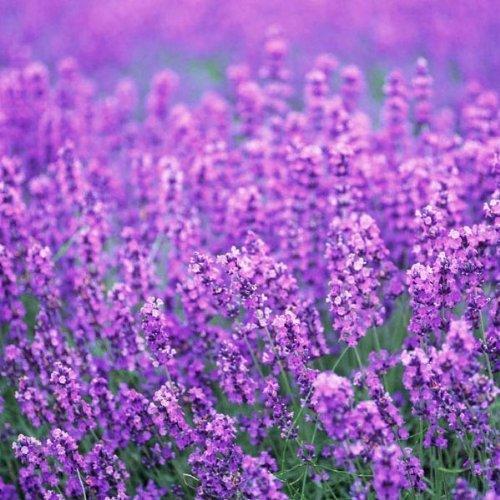 Graines Mini Can Fleurs Plant Bureau Indoor Plant Mini
