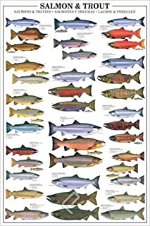 Empire Merchandising 648952Educational Salmon and Trout Trout and Salmon Education Educational Poster Print