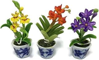Best thai orchid plant Reviews