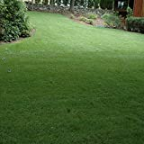 Outsidepride SPF-30 Heat & Drought Tolerant Hybrid Bluegrass Lawn Grass Seed - 10 LBS