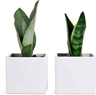 Greenaholics Plant Pots - 4.9 Inch Square Matte Ceramic Planter for Snake Plant Seedling, Water Planting, No Drainage Hole, Set of 2