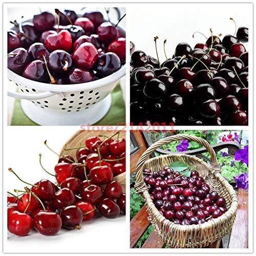 Bloom Green Co. 10pcs / bag rot schwarz Kirschkerne, japanische Kirschkerne, Gemüse, Obst, Saatgut, Pflanzensamen Kirsche Bonsai-Anlage für Hausgärten mischte