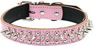 Didog Leather Padded Spiked Studded Dog Collar for Small Medium Dogs