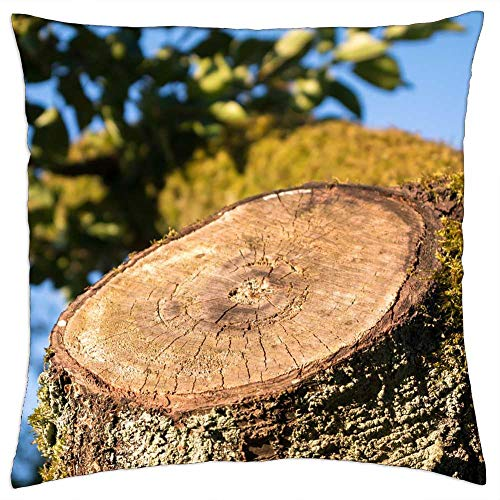 LESGAULEST Throw Pillow Cover (24x24 inch) - Aststumpf Tree Stump Sawed Off Tree Wood Forest