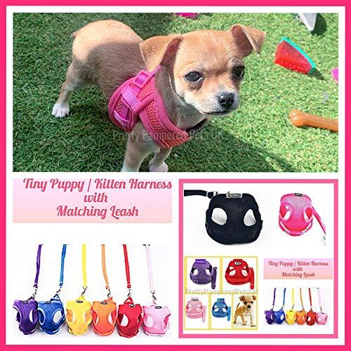 Pretty Pampered Pets Chihuahua-Geschirr, Größe XXXS, XXS, XS, Welpen-Geschirr für kleine Welpen, Chihuahua, Yorkie, Teetasse, Kätzchen, Welpen, Hunde-Mantel