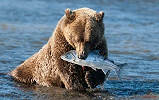 KaoHun Brown Bear catching a Fish - Animal Picture Art Canvas Print Poster,Home Wall Decor 42x28 inches